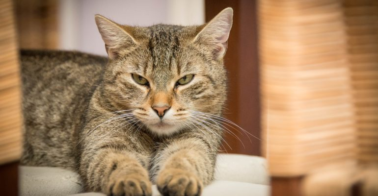 Pisica a lins constant: motivele acestui comportament
